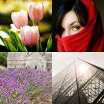flowers, woman, lavender, louvre pyramid