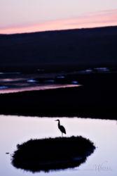 egret Drakes Estuary